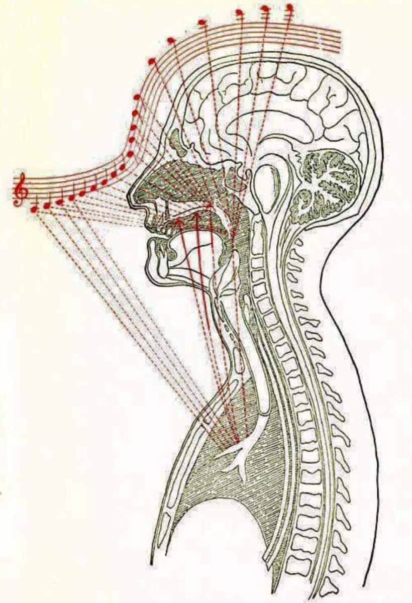 Как пение влияет на здоровье? 11 причин петь каждый день, даже для похудения